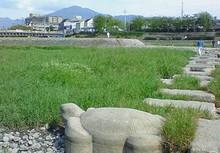 Kamogawaderuta2