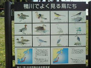 鳥たちも・・