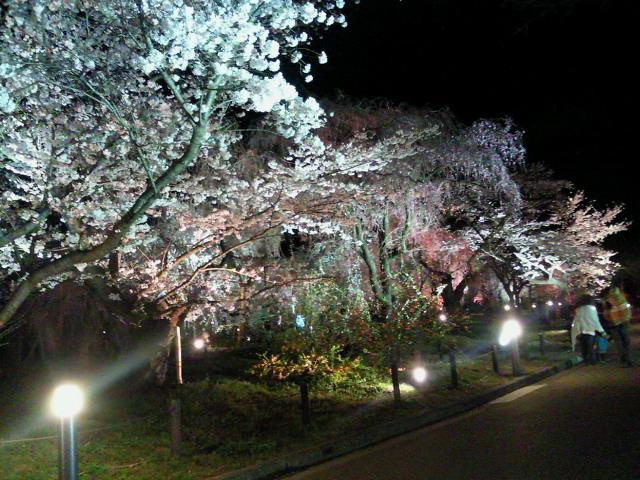 夜の植物園